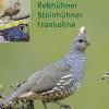 Wachteln Rebhühner Steinhühner Frankoline