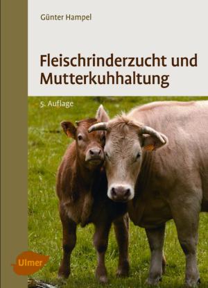 Fleischrinderzucht und Mutterkuhhaltung