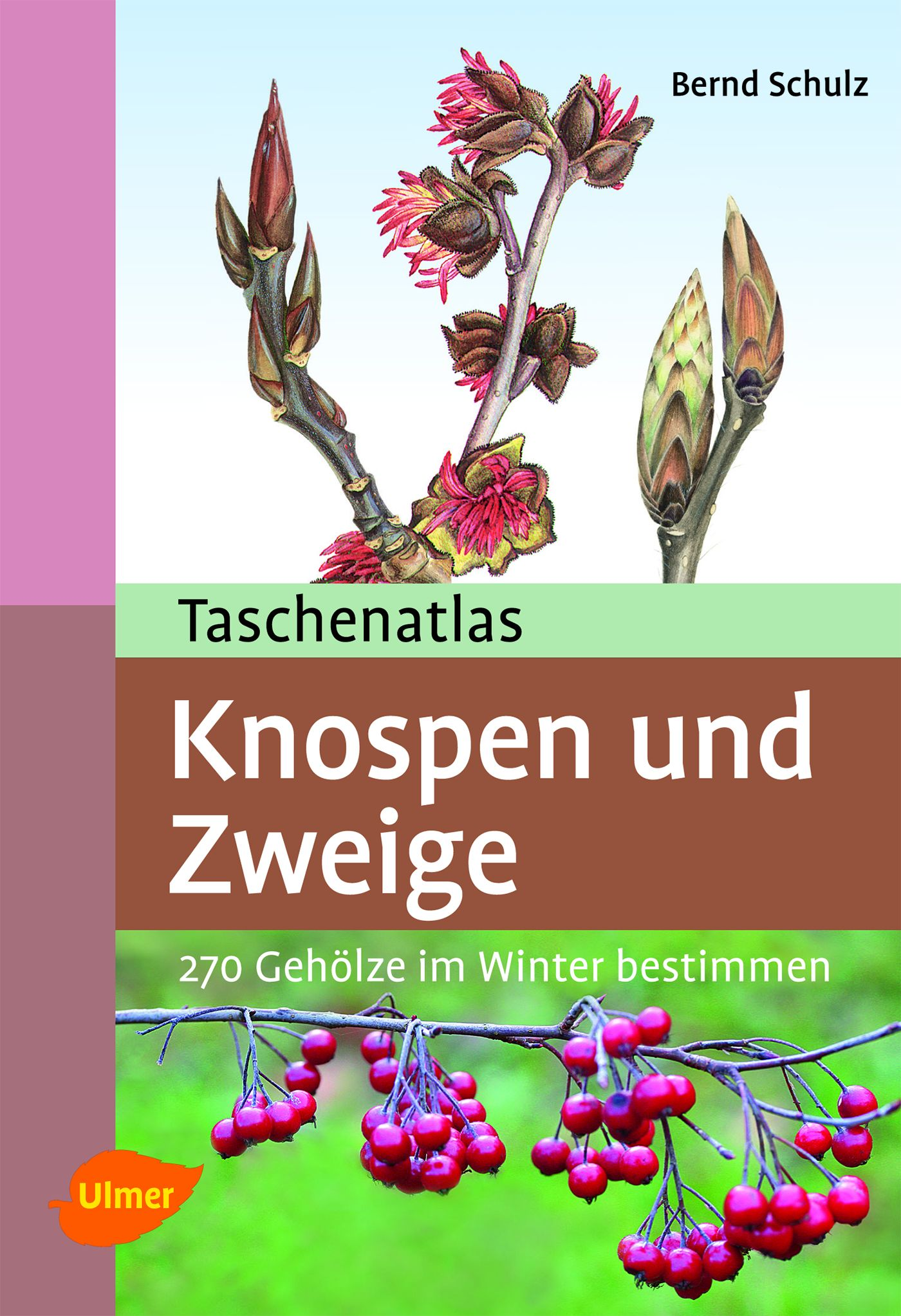 Taschenatlas Knospen und Zweige